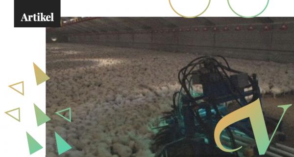 hurdördjur2_kycklingar